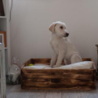 Weinfass Hundebett Hundekorb Schlafplatz Wohnwelten