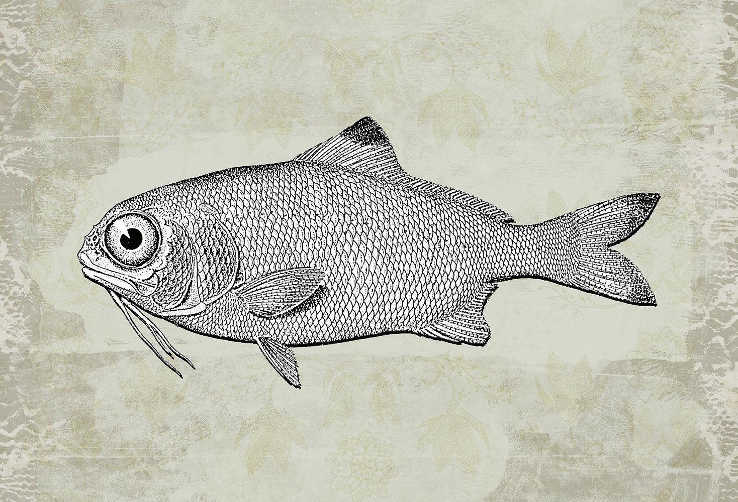 Fototapete Tapete Fisch Zeichnung