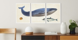 3 x Vintage Triptych Whale Illustration from the Natural History Museum, gerahmte Kunstdrucke (A3), Mehrfarbig und Weiss - MADE.com