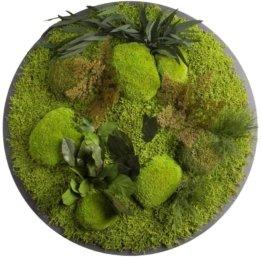 Moos Moos Manufaktur Rundes Moosbild - Dschungel Hell - Ø 70cm auf Holzfaserplatte anthrazit