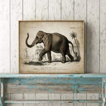 Leinwand Elefant Vintage Illustration Bilder Wandkunst Kunstwerk 70 x 90