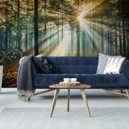 Fototapete Wald 3D Effekt 240 x 360 cm Vlies