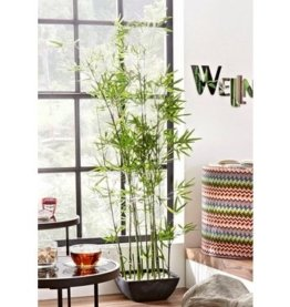 Kunstpflanze »Bambus«, Schneider, Höhe 150 cm