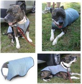 EQDOG Vest Kühlweste für Hunde Bulldogge, Mops